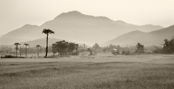 Morning haze over rice paddies and sugar palms.