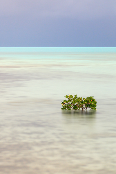 Mangrove before the storm